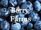 Berry Farms