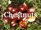 Chestnut Farm